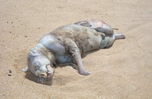 montauk_monster